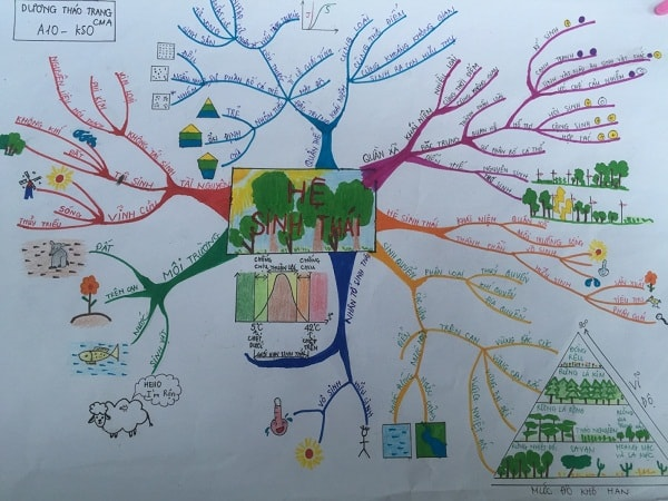 Sơ đồ tư duy sinh học sáng tạo